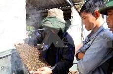 Busca provincia vietnamita impulsar cultivo de plantas medicinales  con apoyo de Estados Unidos
