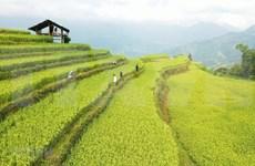 Hoang Su Phi: atractivo destino turístico en la región noroeste de Vietnam