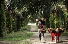 Considera la India limitar importación de productos de Malasia