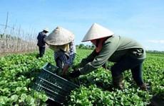 Evalúa Vietnam 15 años de economía colectiva