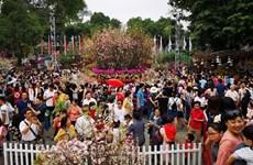 Incluirá un amplio programa artístico el V Festival de Sakura en Hanoi