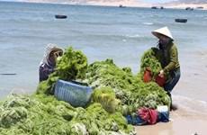 Proyectan Vietnam y Corea del Sur hacia una economía verde