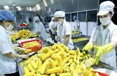 Busca Vietnam impulsar exportaciones de flores, frutas y verduras a Asia y Europa