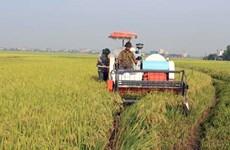 Provincia vietnamita de Vinh Phuc impulsa desarrollo de industria en zonas rurales