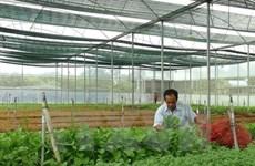 Afirman que provincia vietnamita de Dak Lak necesita dirección clara para la agricultura orgánica