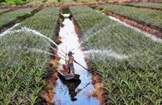 Estimulan el desarrollo agrícola en la subregión Mekong- Lancang