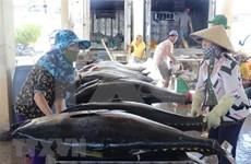 Vietnam- mayor exportador de atún enlatado a Estados Unidos