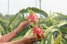 Intensifican Vietnam e Italia lazos en comercio y conservación de naturaleza