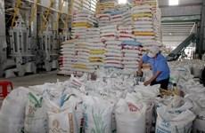 Reconocen al arroz de provincia vietnamita de Soc Trang como el mejor del mundo