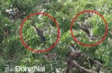Descubren en provincia vietnamita de Dong Nai valiosa especie de ave