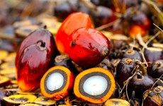 Reanuda la India importaciones de aceite de palma de Malasia