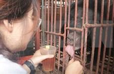 Mejoran en Vietnam conciencia pública sobre la protección de los osos