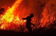 Impone Indonesia pago de compensación multimillonaria a culpables de incendios forestales