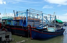 Provincia de Vietnam empeñada en reforzar combate contra la pesca ilegal