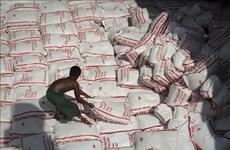 Disminuirá la producción de arroz de Tailandia en temporada 2019-2020