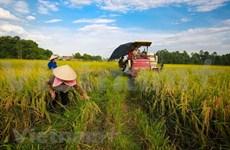 Goza sector agrícola vietnamita de un superávit comercial de 8,8 mil millones de dólares