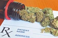Incautan en Vietnam 5,8 kilogramos de marihuana transportada desde Camboya