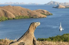 Promueve Indonesia el turismo hacia la Isla de Komodo