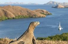 Promueve Indonesia el turismo hacia la Isla de Komodo