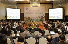 Debaten en Vietnam necesidad de establecer zonas de materias primas para mercado agrícola