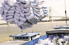 Ascendieron las ventas de arroz de Vietnam a  5,91 millones de toneladas en los primeros 11 meses de 2019