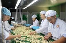 En alza las exportaciones del anacardo vietnamita a China