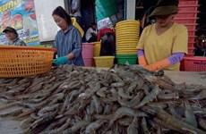 Exportaciones de camarones de Tailandia crecerán 20 por ciento en 2020