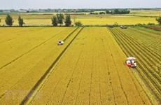 Vietnam en cuarto lugar del Sudeste Asiático en clasificación de seguridad alimentaria