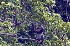 Lanzan programa juvenil sobre protección de primates en Vietnam