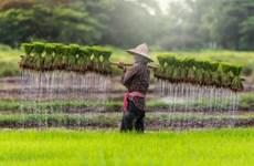 Prevén grandes inversiones estadounidense en agricultura de Camboya