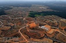 Nueva capital de Indonesia será provincia autónoma