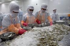 Destacan a Singapur como mayor importador de camarón vietnamita