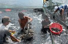 Provincia vietnamita de Dak Lak emite plan de protección sanitaria de especies acuícolas