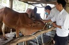 Ofrece Vietnam asistencia a Camboya en lucha contra la fiebre aftosa