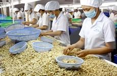 Proyecta Vietnam ingresar cuatro mil millones de dólares por exportaciones de anacardo