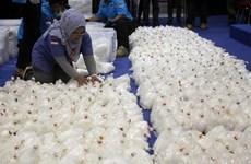 Desarticulan en Indonesia red de narcotráfico en los días de Navidad