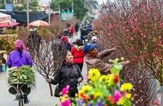 Abrirán en Hanoi mercados de flores en ocasión del Año Nuevo Lunar
