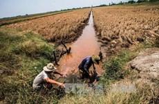 Pronostican empeoramiento de salinización en Delta de Mekong