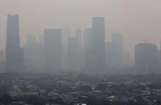 Registra Indonesia cientos de miles de muertos por contaminación