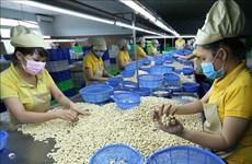 En alza exportaciones de anacardo de Vietnam en 2019