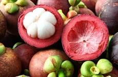 Fortalece Indonesia exportaciones de mangostán de Bali