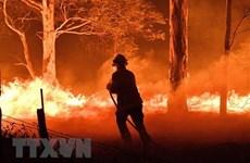 Vietnam envía condolencias a Australia por incendios forestales