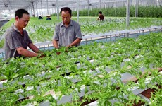 Fija Vietnam meta de lograr 42 mil millones de dólares de exportaciones agrícolas en 2020