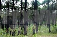 Une Vietnam a la red internacional de gestión forestal sostenible