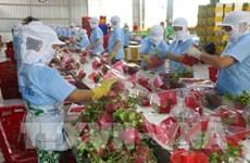 Aspira Vietnam a ingresar cinco mil millones de USD por ventas de frutas y vegetales en 2020