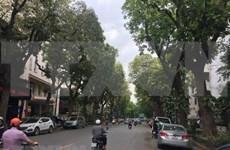 Hanoi plantará más de mil árboles para festejar el Tet