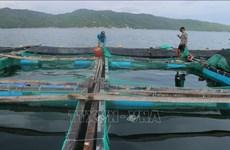 Capital de la industria camaronera de Vietnam
