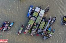 Exploran la vida en el río Hau en ciudad vietnamita de Can Tho