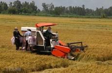 Pronostican dificultades en la modernización rural en Vietnam