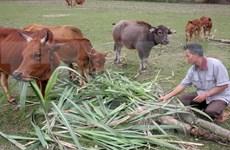 Alcanza Vietnam logros impresionantes en reducción de pobreza